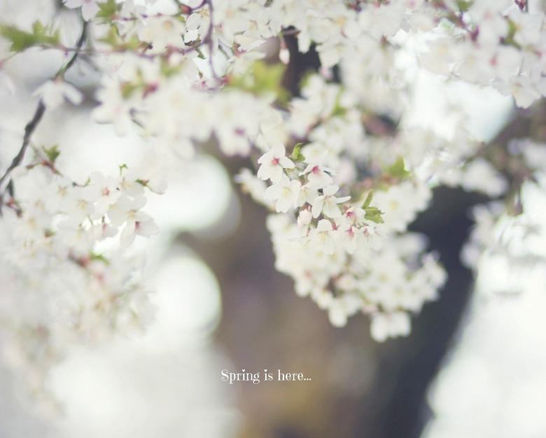 Bloesem - bloesemboom