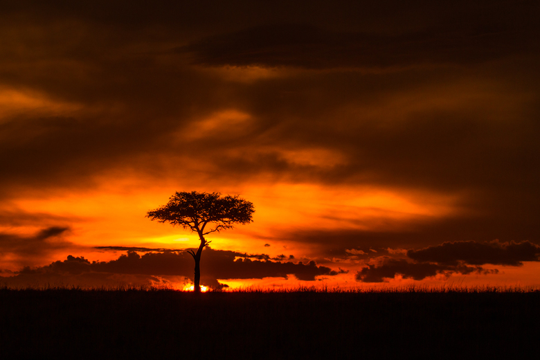 African Sunset in the Mara