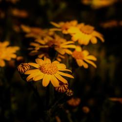 Gewoon 'n bloemetje