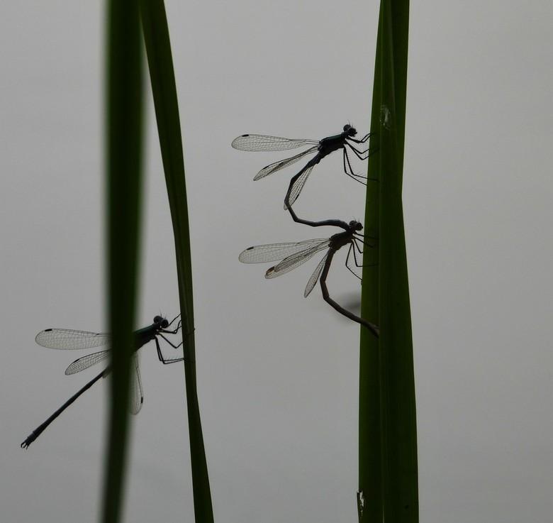 te laat - ja ik denk ook een heel gevecht want er vliegen er dan zoveel  maar mooi om te zien .<br /> het zijn toch mooie fotomodelletjes.<br /> gr