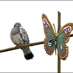 Vreemde vogel.
