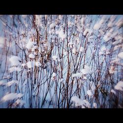 Sneeuwbolletjes
