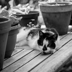 Kat tussen de slastekken