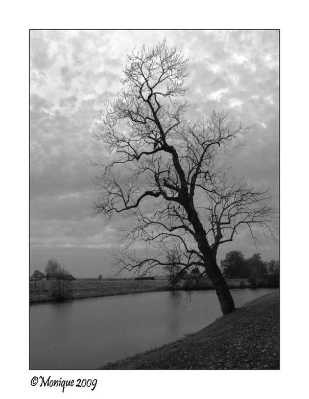 De boom van Pisa... - Deze boom zag ik net achter de verdedigingswal van Elburg. Als een wachter stond hij daar op zoek naar vijanden. Wel een beetje