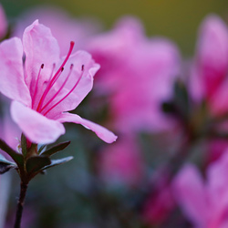 fotowedstrijd_lente-04