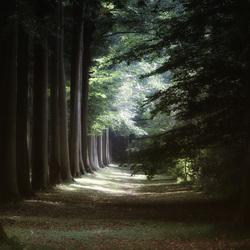zomers licht