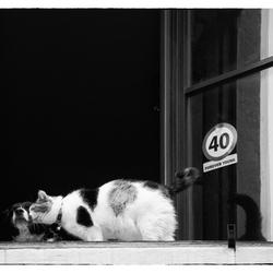 Als kat...