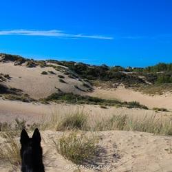 Bo in de duinen