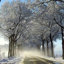 winterse mist