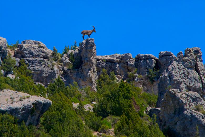 steenbok 1 - Steenbok op de rotsen, hoe mooi kan je het hebben, dat is een voordeel als je met z'n tweeën rijdt, de een kijkt links de ander rech
