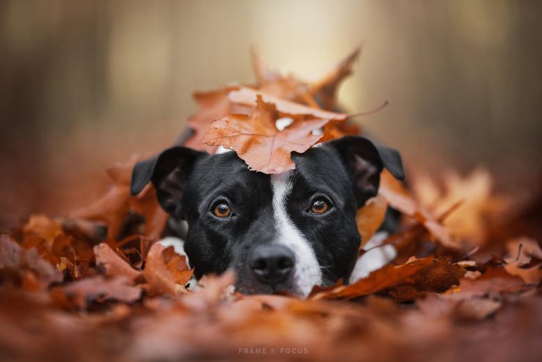 A Pile Of Autumn Cuteness - Herfst en honden zijn een perfecte combo.