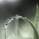 Regen- en dauwdruppels
