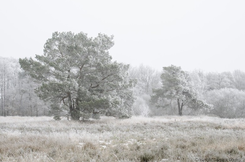 Frosty Trees - The frost is turning the landscape in a beautiful winter wonderland.