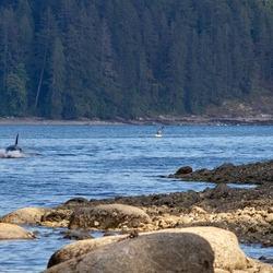 Waterpret, Kayaking met orka's
