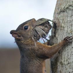 Eekhoorn heeft een mond vol