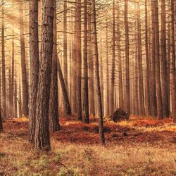 Trees on dry Ground