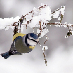 Winter...!!!!