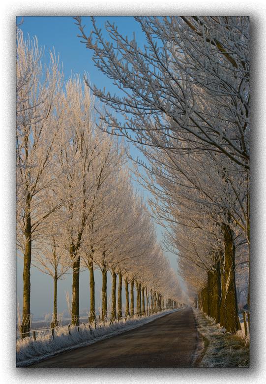 Winterlaan - Ik kan het niet laten om toch nog een foto te uploaden van vandaag, even een uurtje op pad geweest en toch veel mooie foto's. Deze h