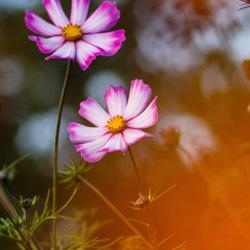 Bloemen in de herfst