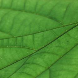 groen is goed voor de ogen- 3
