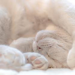 Ook een manier van slapen