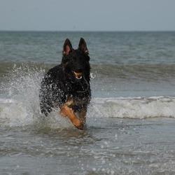 björk op het strand