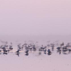 Bird Lake.......