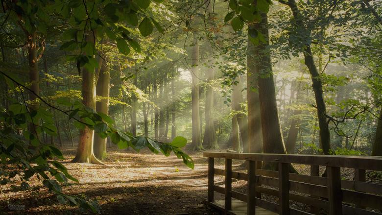 Zonnestralen door de ochtendnevel - Zonnestralen door de ochtendnevel.<br /> De zon heeft kracht genoeg, komt door de mist en zorgt voor een mooie sf