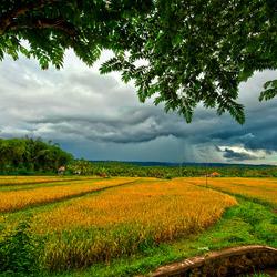 Bali rain