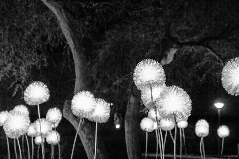 Glow black and white -