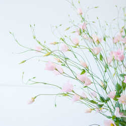Flower on monday