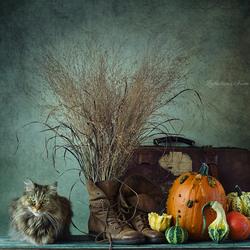 De herfst is in aantocht! (deel 2)