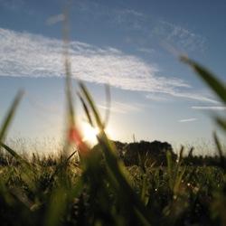zonsondergang door grasveld