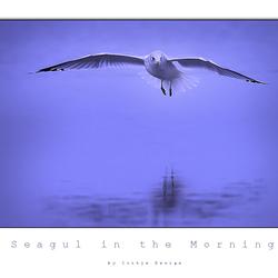 Seagul in the Morning...