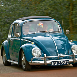 Beetle story ...☺!