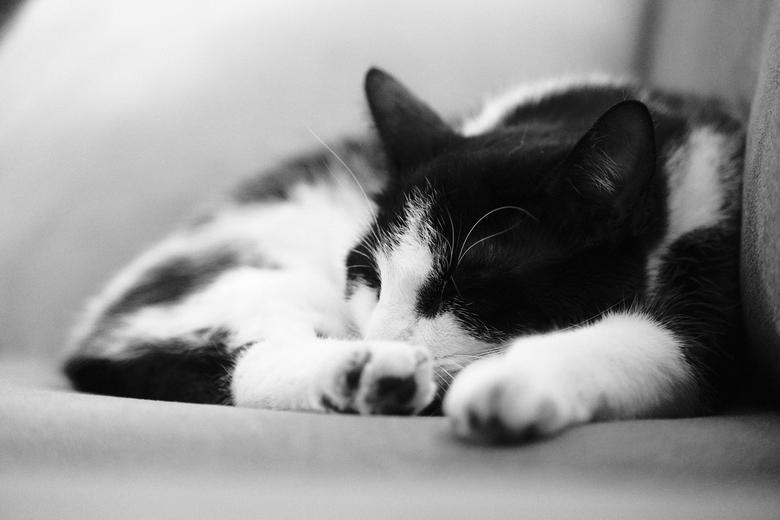 Chill to the max - Het is 7u in de ochtend. De kat is de hele nacht buiten geweest. Na een uitgebreide wasbeurt ploft hij op de bank neer en valt in s