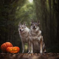 Pumpking Duo