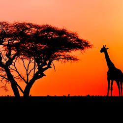 African mood - final version