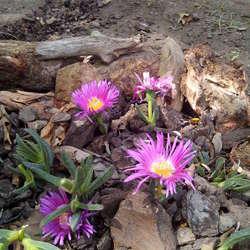roze bloempjes