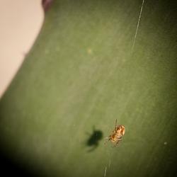Litle spider!