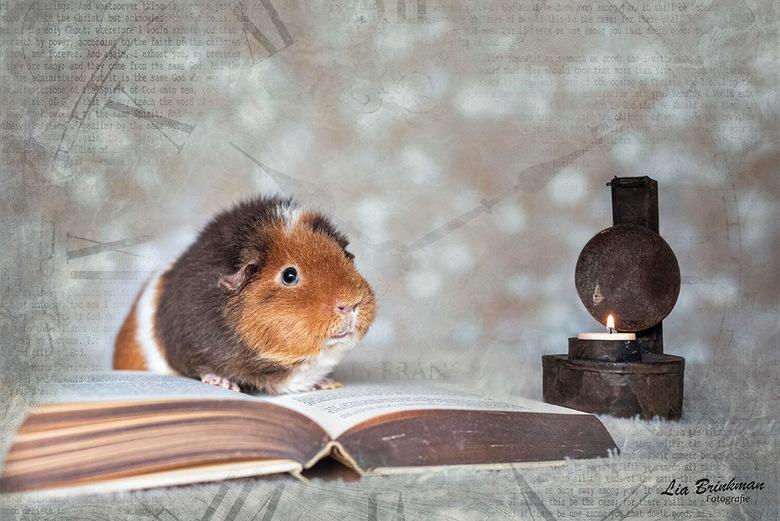 The storyteller - The storyteller, <br /> Buiten is het koud en grijs maar binnen in huis word een spannend verhaal voorgelezen.<br /> <br /> Groet