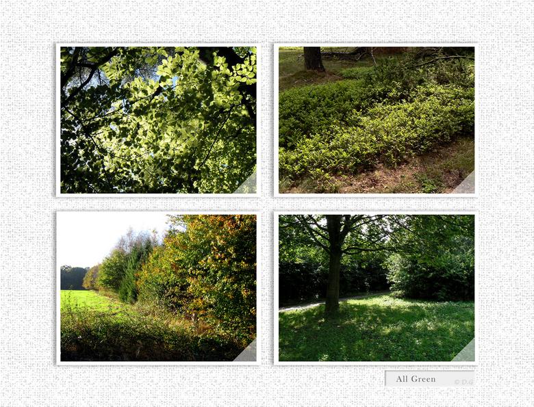 """All Green - Even in het groot bekijken <img  src=""""/images/smileys/wilt.png""""/><br /> <br /> Ik heb deze 4 foto&#039;s op verschillende locaties gemaa"""