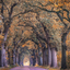 tunnel of trees