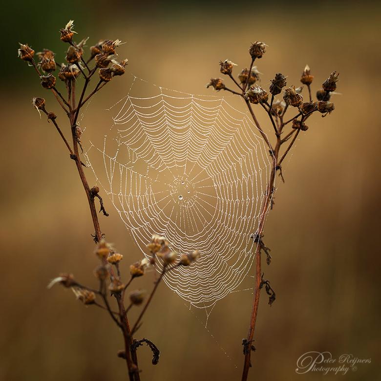 """Charlotte's web - vorige week deze opname kunnen maken...ik zeg op naar de herfst <img  src=""""/images/smileys/smile.png""""/><br /> Iedereen een fijn wee"""
