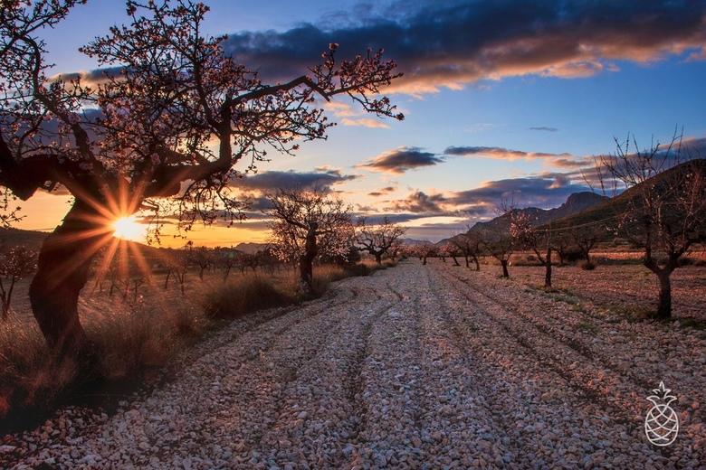 Spring is coming... - De eerste amandelbloesem is alweer zichtbaar<br /> Blijft genieten, gelijk de zonsondergang maar meegepakt....