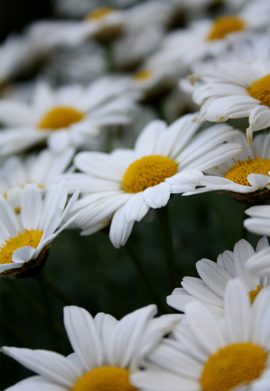 Bloemen - Bloemen in het bos, van de zomer