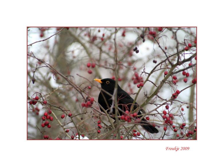 merel  - Een foto die ik in dec heb gemaakt tijdens de eerste sneeuwperiode .<br /> Hartelijk dank voor de leuke reacties op mijn vorige upload .<br