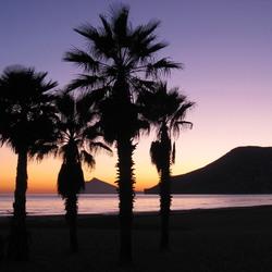 Palmen op het strand