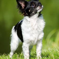 Kleine pup in het groen