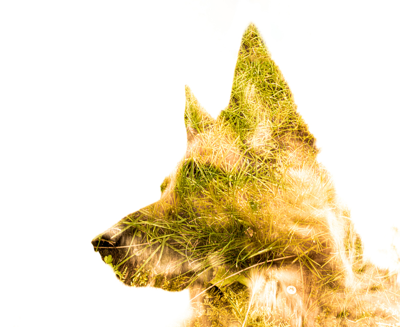 buitenhond -